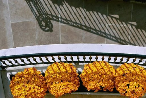 Orange Chrysanthemums adorn the Blue Room Balcony of the White House South Portico. White House photo by Tina Hager.