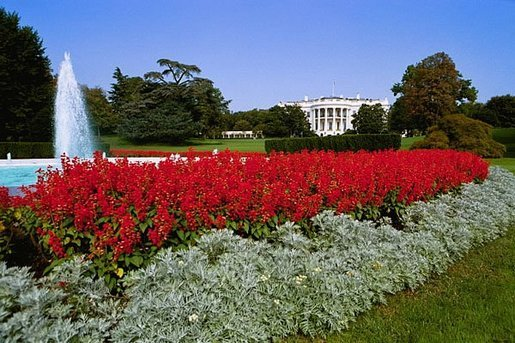 The South Grounds Fountain is encircled by Salvia (Red Flare) and Dusty Miller during the 2004 fall garden season at the White House. White House photo by Tina Hager.