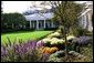 Varieties of Chrysanthemums, Salvia, Santolina and Asters bloom in the Rose Garden of the White House during the 2004 fall season. White House photo by Tina Hager.