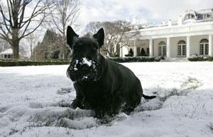 foto da Casa Branca