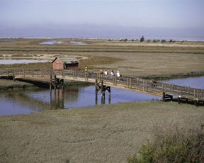 More than 15,000 acres of former commercial salt ponds are being rehabilitated in San Francisco Bay, California. (FWS)