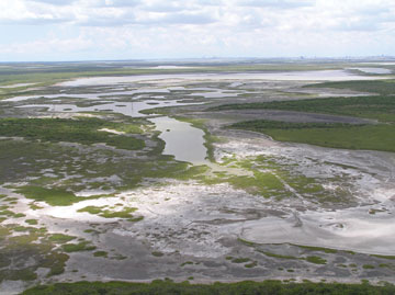 Wetlands purchased in the Nueces River Delta of the Coastal Bend area near Corpus Christi, Texas. (EPA)