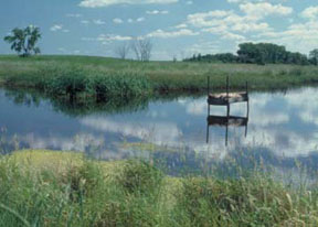 This wetland restoration project—in a focus area of the South Dakota Partners for Fish and Wildlife Program—benefits high-priority migratory bird species. (FWS)