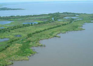 Pre-construction view of the project area in southern White Lake, Vermilion Parish, Louisiana, showing the severely eroded shoreline in the foreground. (FWS)
