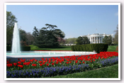 Click here to White House Gardens – Spring Photo Essays