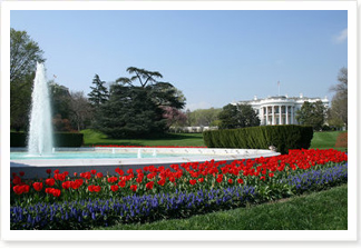 Red tulips and hyacinth surround the White House South Lawn fountain Thursday, April 10, 2008.