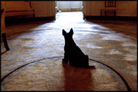 From the Diplomatic Reception Room doorway on April 16, 2002, Barney waits attentively for President Bush. Before the 1902 renovation, the Diplomatic Room and the other rooms on the ground floor were used for storage.