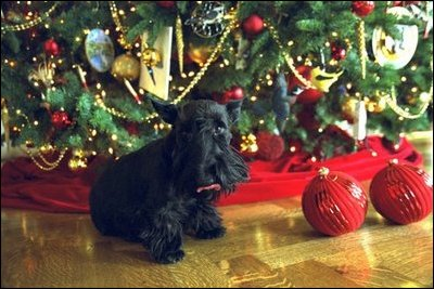 Barney poses for the cameras under the White House Christmas Tree in the Blue Room, Monday Dec. 9, 2002.