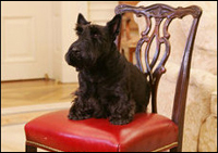 Barney listens to President George W. Bush during a meeting in the Oval Office, Friday, Dec. 1, 2006, to discuss plans for the 2006 Barney Cam.