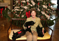 Mrs. Laura Bush poses with Barney, Miss Beazley and the family cat Willie, nicknamed 'Kitty,' Friday, Dec. 1, 2006, next to the White House Christmas Tree in the Blue Room.