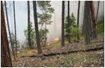 Fire behavior in a small area that was thinned: Fire burns low and on the ground