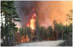 Fire behavior in unthinned forests: Fires burn at high temperatures and reaches tops of trees