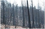 These severe fires destroy forests, killing trees, sterilizing soils and accelerating erosion