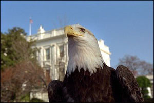 As the Easter Bunny poses for photos, April 1, 2002, a bald eagle makes an appearance at the White House Easter Egg Roll courtesy of Jack Hanna's Animal Adventures.