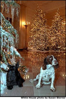 Photo of Barney and Spotty next to a tree in cross hallway. White House photo by Susan Sterner.