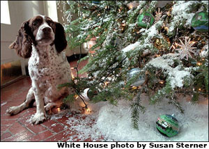 Spotty next to East Corridor tree. White House photo by Susan Sterner.