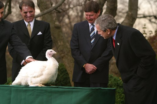 "President George W. Bush looks over Katie, the National Thanksgiving Turkey, during the annual ceremonial pardoning in the Rose Garden, Tuesday, Nov. 26. ""By virtue of this pardon, Katie is on her way not to the dinner table, but to Kidwell Farm in Herndon, Virginia. There she'll live out her days as safe and comfortable as she can be,"" said President Bush before granting the pardon. White House photo by Paul Morse."
