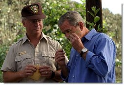 President George W. Bush smells a branch of sage with Ralph Waycott, volunteer coordinator of the Rancho Sierra Vista Nursery, during a tour of the Santa Monica Mountains National Recreation Area in Thousand Oaks, Calif. File photo.  White House photo by Paul Morse