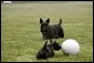 Barney keeps a close watch as Miss Beazley checks out his soccer ball. White House photo by Eric Draper.