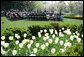 The tulips are in full bloom in the Rose Garden at the White House Wednesday, April 20, 2005, as the President and First Lady welcome the 2005 National and State Teachers of the Year. White House photo by Eric Draper
