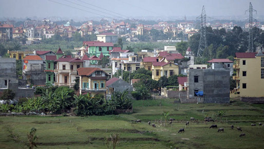 Cattle graze on the outskirts of Hanoi Friday, Nov. 17, 2006, site of the 2006 APEC Summit. White House photo by Paul Morse