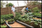 Mrs. Laura Bush and Ms. Jenna Bush pick vegetables during their visit to the Fann Hospital garden Tuesday, June 26, 2007, in Dakar, Senegal. They toured the hospital garden with Steve Bolinger, former Peace Corps volunteer and co-founder of Development in the Garden. The garden provides fresh vegetables and an opportunity for patients to garden. White House photo by Shealah Craighead