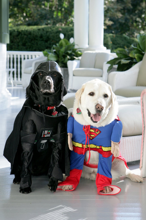 Vice President Dick Cheney's Labrador retrievers Jackson, left, and Dave, right, prepare for Halloween, Tuesday, Oct. 30, 2007, as they sit for a photograph at the Vice President's Residence at the Naval Observatory in Washington, D.C. Jackson is dressed as Darth Vader, Dave is dressed as Superman. White House photo by David Bohrer