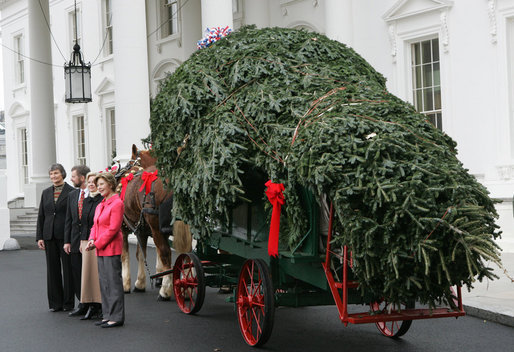 Mrs. Laura Bush welcomes the arrival of the official White House Christmas tree Monday, Nov. 26, 2007, to the North Portico of the White House. The 18-foot Fraser Fir tree, from the Mistletoe Meadows tree farm in Laurel Springs, N.C., will be on display in the Blue Room of the White House for the 2007 Christmas season. Joining Mrs. Bush, from left are, Beth Walterscheidt, president of the National Christmas Tree Association, and Joe Freeman and his wife Linda Jones of Mistletoe Meadow tree farm in Laurel Springs, N.C. White House photo by Chris Greenberg