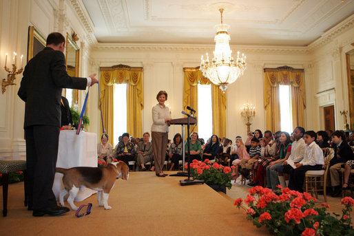 Mrs. Laura Bush welcomes the Westminster Kennel Club's 2008 Best in Show winner, Uno, Monday, May 5, 2008, to the East Room of the White House. White House photo by Shealah Craighead