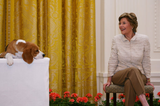 Mrs. Laura Bush smiles as the Westminster Kennel Club's 2008 Best in Show winner, Uno, is introduced to invited guests Monday, May 5, 2008, in the East Room during the beagle's visit to the White House Monday, May 5, 2008. White House photo by Shealah Craighead