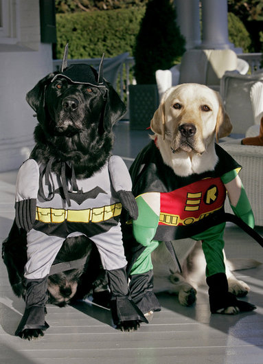 Vice President Dick Cheney's Labrador retrievers are ready for Halloween dressed as Batman and Robin, Thursday, Oct. 30, 2008, at the Vice President's Residence at the Naval Observatory in Washington, D.C. The dynamic duo's secret identities are Jackson, left and Nelson, right. White House photo by David Bohrer