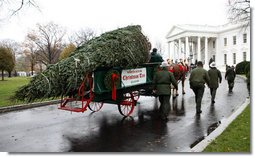 Sue Harman drives a horse-drawn carriage delivering the official White House Christmas tree Sunday, Nov. 30, 2008, to the North Portico of the White House. The Fraser Fir tree, from River Ridge Farms in Crumpler, N.C., will be on display in the Blue Room of the White House for the 2008 Christmas season. White House photo by Chris Greenberg