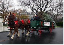 Sue Harman drives a horse-drawn carriage delivering the official White House Christmas tree Sunday, Nov. 30, 2008, to the North Portico of the White House. The Fraser Fir tree, from River Ridge Farms in Crumpler, N.C., will be on display in the Blue Room of the White House for the 2008 Christmas season. White House photo by Joyce N. Boghosian