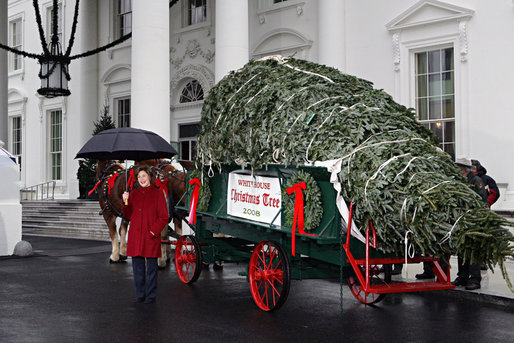 Mrs. Laura Bush delivers remarks as she stands with the White House Christmas tree Sunday, Nov. 30, 2008, in front of the North Portico of the White House. The Fraser Fir tree, from River Ridge Farms in Crumpler, N.C., will be on display in the Blue Room of the White House for the 2008 Christmas season. White House photo by Joyce N. Boghosian