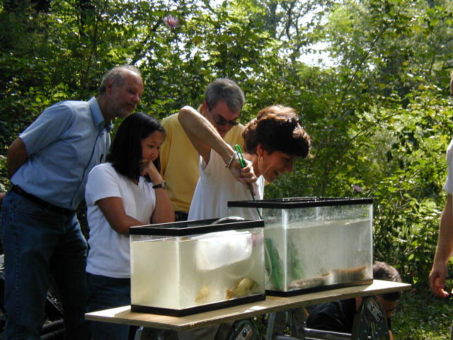 EPA Deputy Administrator Linda Fisher reaches into an aquarium to release native fish into a Maryland stream restored with an EPA nonpoint source grant.
