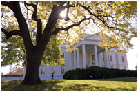 Gold leaves adorn the elm tree in front of the North Portico of the White House. English and American boxwoods flank the front door. White House photo by Tina Hager.