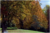 The fall foliage of trees such as the Horse Chestnut (left) and Willow Oak (right) adorn the South Lawn. White House photo by Susan Sterner.