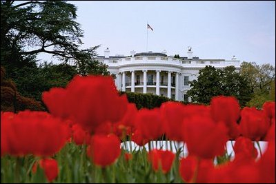 White house flowers architectural designs from showers to flowers spring at the white house mightylinksfo